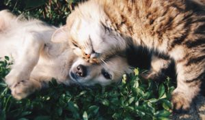 Which Pets Make The Best Birthday Presents?